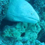 dive hurghada-diving-underwater-moray