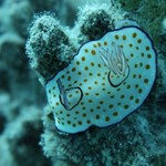 dive hurghada-diving-scuba-fish