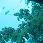 dive hurghada-sea-red sea-hurghada