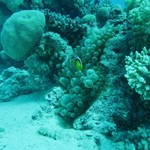 dive hurghada-hurghada-sea-red sea-egypt-diving-beatiful