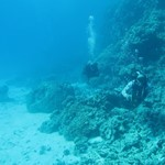 dive hurghada-diving-dive-coral-hurghada