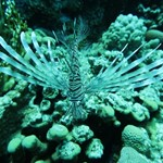 dive hurghada-lion fish-photo-underwater-sea