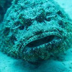 dive hurghada-fish-stonefish-diving-dive-photo-underwater