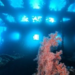 dive hurghada-diving-dive-diver-photo-wreck-abu nuhas-deep-hurghada-red sea-egypt