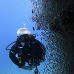 daily diving- dive in hurghada