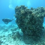 dive hurghada-diving-scuba-sea-underwater-coral-fish-diver-sun-res sea-sea-egypt-hurghada-sport
