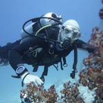 reef diving-dive in read sea